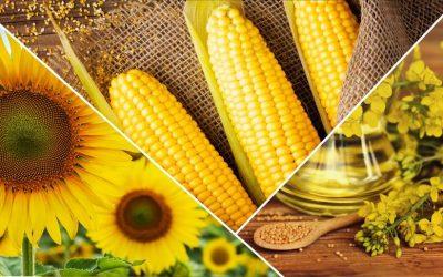 """Cargill'in """"1000 Çiftçi 1000 Bereket"""" programı tarladaki verimi artırdı"""